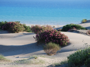 Dunes and flowers