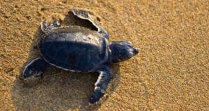 dardanos_hotel_turtles_birth