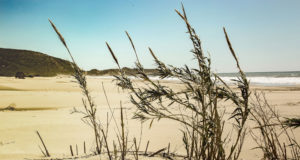dardanos_beach_001