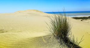 dardanos_beach_002